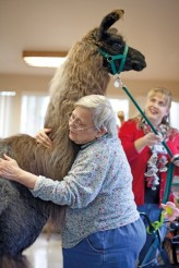 Holly Barto hugs a therapy llama at Bellingham Health and Rehabilitation Center, USA © Jen Osborne  Photography