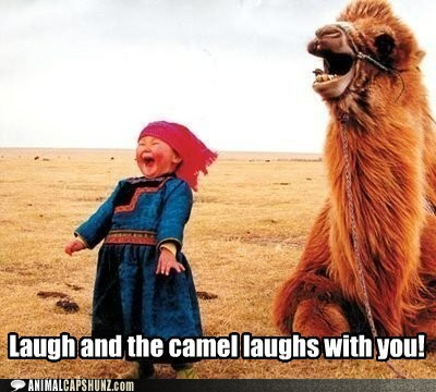 funny-animal-captions-laugh-and-the-camel-laughs-with-you