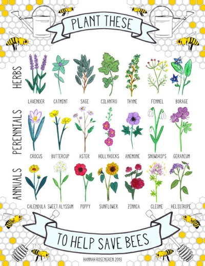 21 Bee-Friendly Plants © Hannah Rosengren
