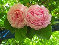 Summer Bloom ©Emma Tuzzio