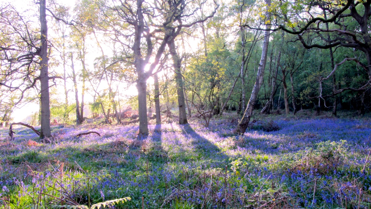 All Aboard The Magic Carpet Of Bluebell Bliss