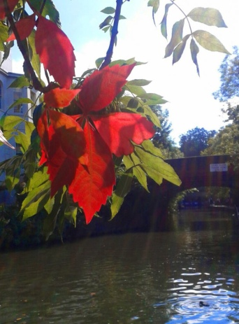 Autumn leaves by me