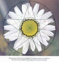 daisy-geometry