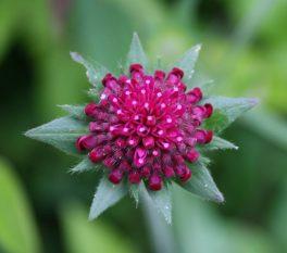 Flower_Mandala©Emma_Tuzzio_MG_0029