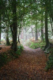 Autumn Woodland ©Emma Tuzzio