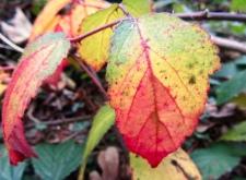Autumn Colour ©Emma Tuzzio_