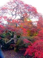 Autumn Colour ©Emma Tuzzio