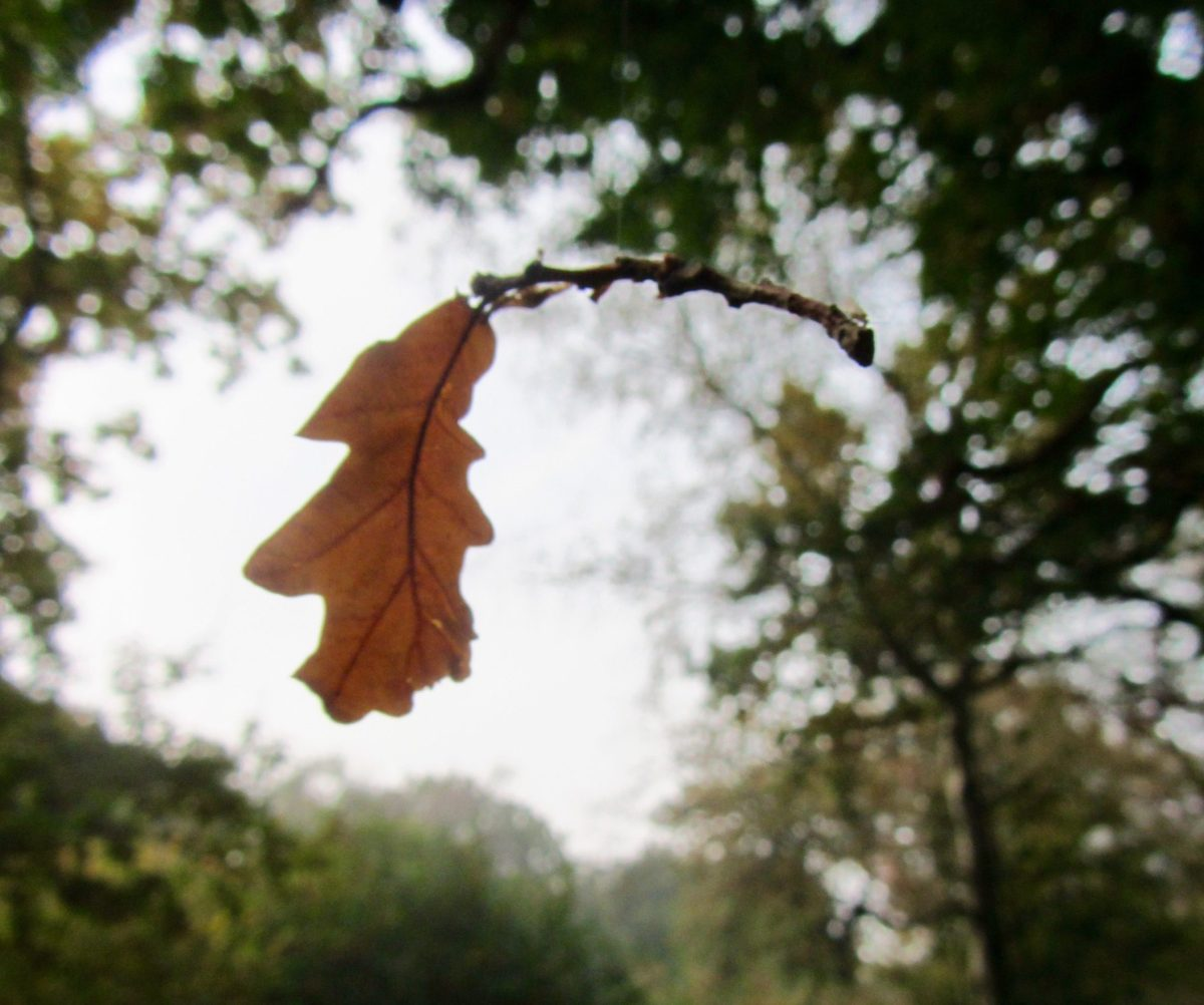 Natures Wisdom - Thich Nhat Hanh on Autumn Leaves: Life, Death, Continuation
