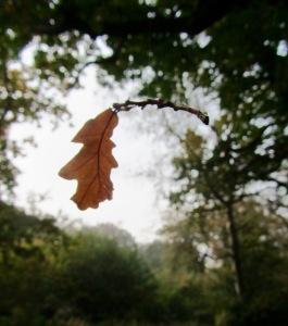 Autumn leaf ©Emma Tuzzio