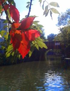Autumn leaf ©EmmaTuzzio