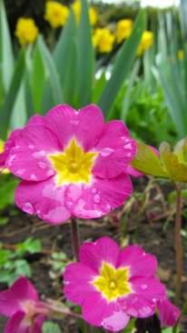 Spring blooms ©Emma Tuzzio