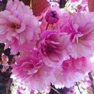 Blossoms ©Emma Tuzzio